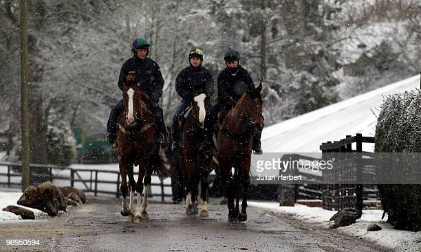 Horses head off to take part in a parade during an open day day at the Barbury Castle Stables of trainer Alan King prior to The Cheltenham National...