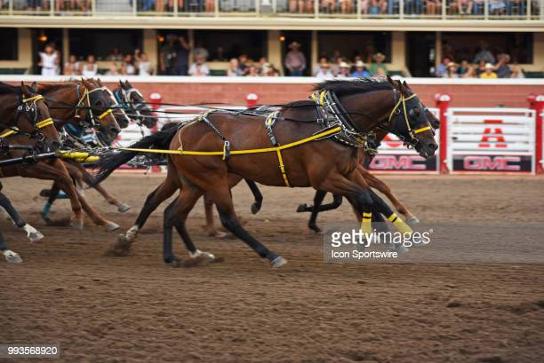 Horses hit the finish line in the GMC Rangeland Derby Chuckwagon Races at the Calgary Stampede on July 6 2018 at Stampede Park in Calgary AB