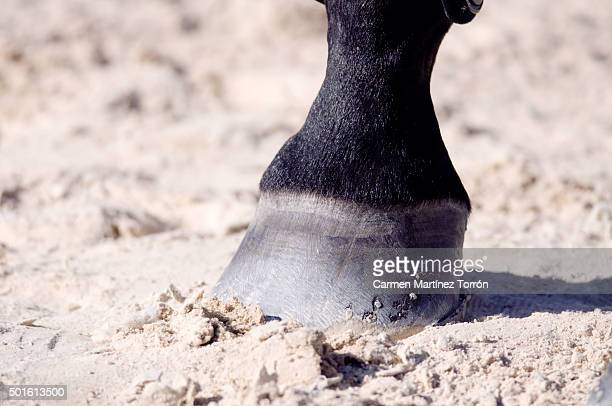Horse's Hooves