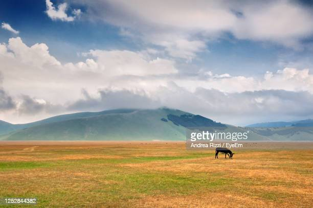 horses in a field - andrea rizzi stock pictures, royalty-free photos & images