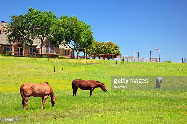 Horses in a ranch on s sunny day
