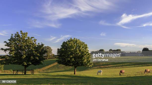 horses in chiltern landscape - jim donahue stock pictures, royalty-free photos & images