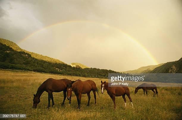 horses in pasture under rainbow - コロラド州 ニューキャッスル ストックフォトと画像