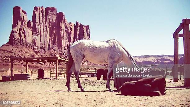Horses In Ranch Against Clear Sky