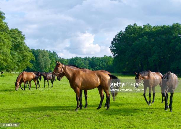Horses In Ranch Against Sky