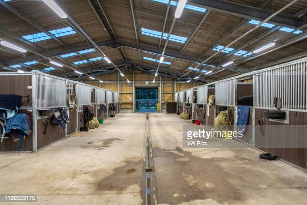 Horses in stalls in a stable in Yorkshire UK