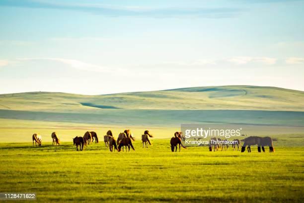 horses in the field. - land brandenburg stock-fotos und bilder