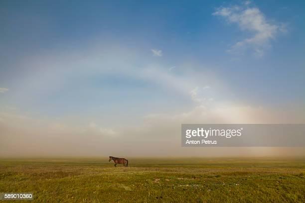 Horses in the fog at dawn