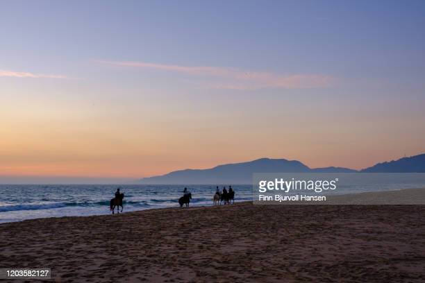 horses in the sunset on the los lanches beach in tarifa - finn bjurvoll stock pictures, royalty-free photos & images