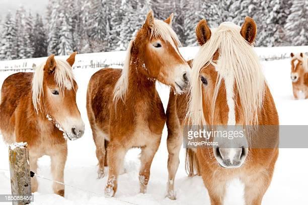 Horses in white winter landscape