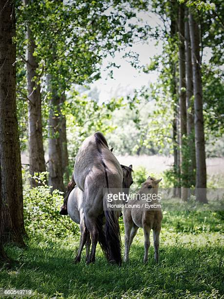 horses in woods - accouplement cheval photos et images de collection