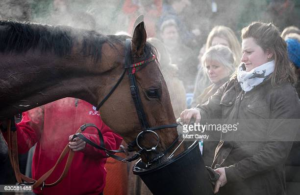 A horses is given water in the parade ground following the first race during the 2016 Coral Welsh Grand National at Chepstow Racecourse on December...