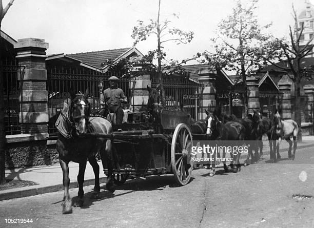 Horses Leaded To Vaugirard Slaughterhouse