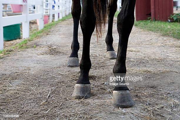 Horse's legs and hooves