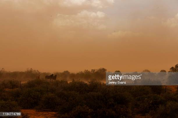 Horses look on during a dust storm on March 05, 2019 in Wilcannia, Australia. The Barkandji people - meaning the river people - live in Wilcannia, a...
