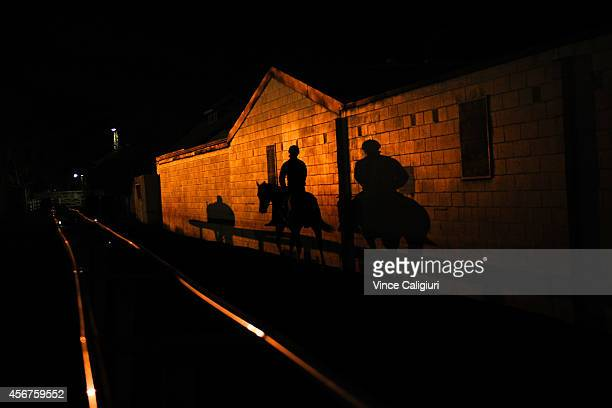 Horses make their way to the track before a Melbourne trackwork session at Caulfield Racecourse on October 7 2014 in Melbourne Australia