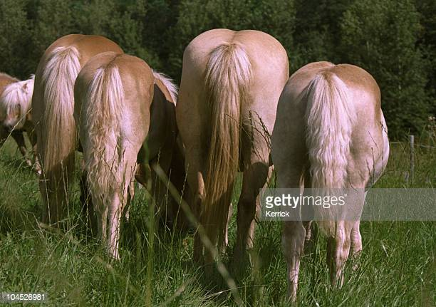 horses mares and foal - backside of Halfinger group