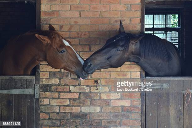 228 Horse Mating Photos and Premium High Res Pictures - Getty Images