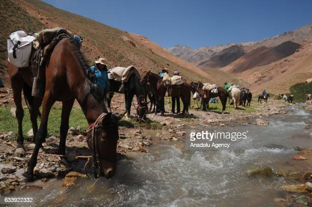Horses of the expedition drink water at a stop called Vegas de Gallardo in the framework of the bicentenary of Cruce de los Andes 2017 in the...