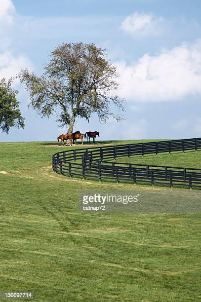 horses on a hill, kentucky bluegrass pasture - lexington kentucky stock pictures, royalty-free photos & images