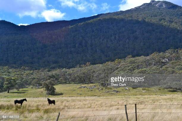 Horses on farm in Australian High Country