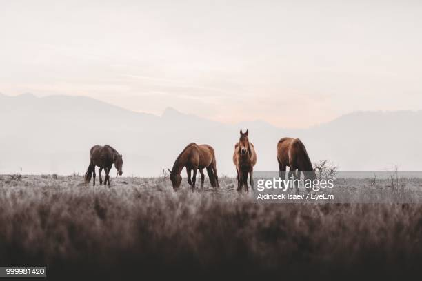 horses on field against sky - grazing stock pictures, royalty-free photos & images