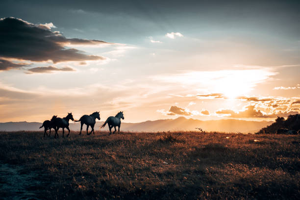 Horses On Field During Sunset
