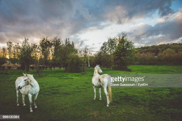 horses on grassy field against cloudy sky - steve guessoum stockfoto's en -beelden