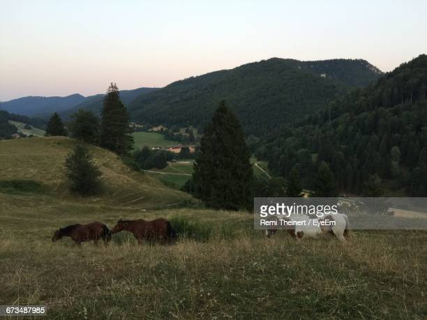 Horses On Grassy Field By Mountain Against Sky