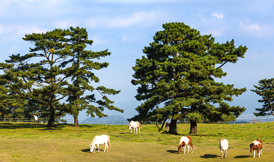 Horses on Jeju Island, South Korea - gettyimageskorea