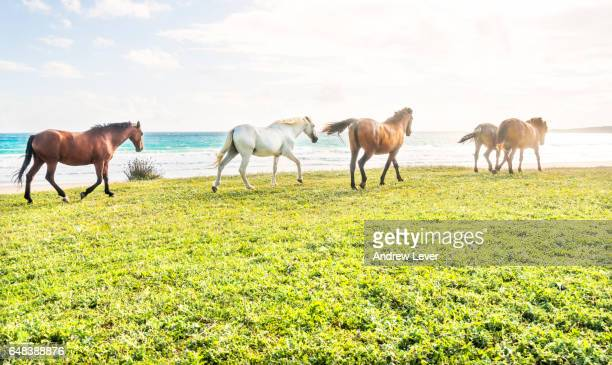horses on the beach - tarifa stock photos and pictures