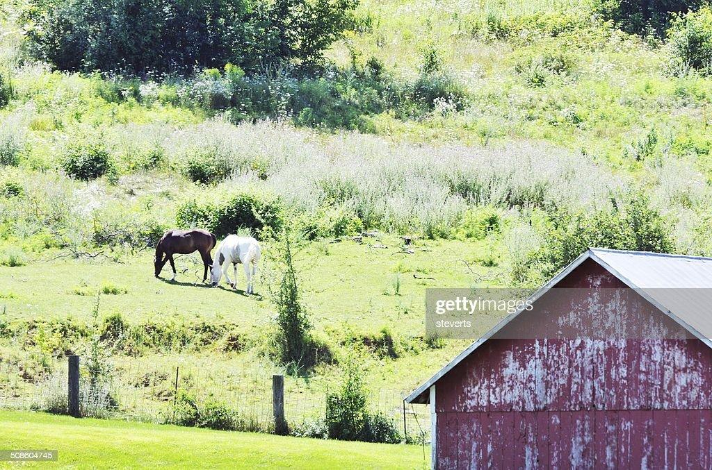 Caballos en la ladera de la colina : Foto de stock