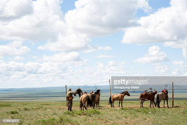 Horses on the Mongolian Steppes