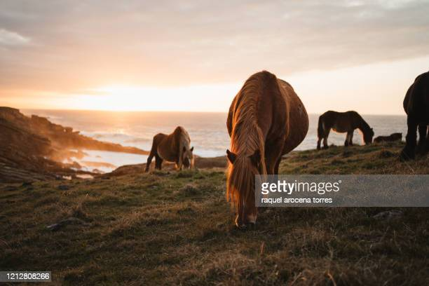 horses on the mountain during sunset - オンダリビア ストックフォトと画像
