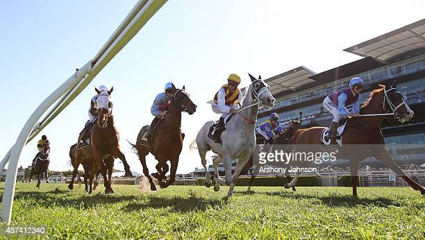 Horses pass the finish post at the start of race 6 during Sydney Racing at Royal Randwick Racecourse on October 18 2014 in Sydney Australia