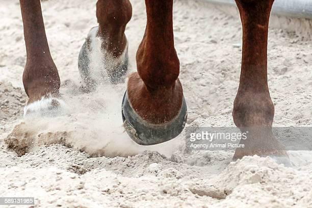 Horses photoshoot