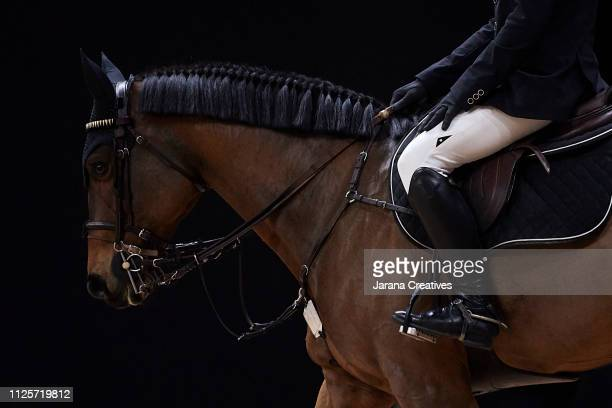 horses - equestrian event stock pictures, royalty-free photos & images