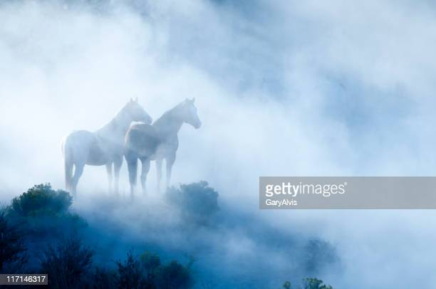 horses - animals in the wild stock pictures, royalty-free photos & images