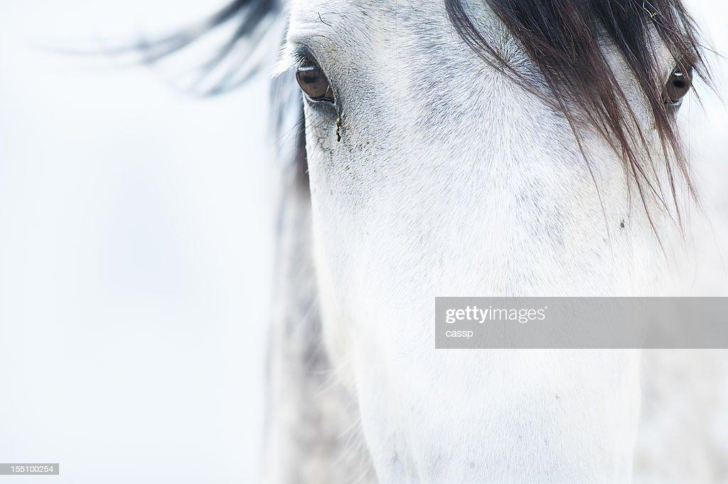 Pferde : Stock-Foto