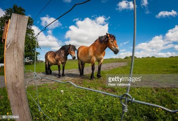 horses - quebra ventos imagens e fotografias de stock