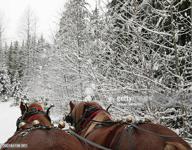 horses pulling sled in snow - rein stock pictures, royalty-free photos & images