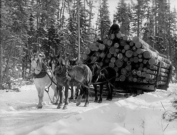 horses pulling sleigh loaded with logs pictures getty images