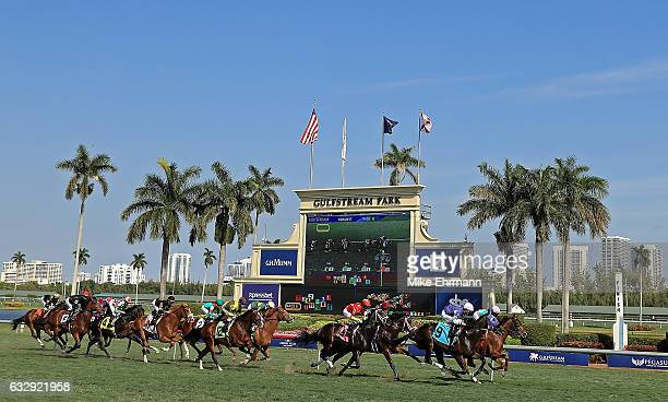Horses race ahead of the $12 million Pegasus World Cup Invitational at Gulfstream Park on January 28 2017 in Hallandale Florida