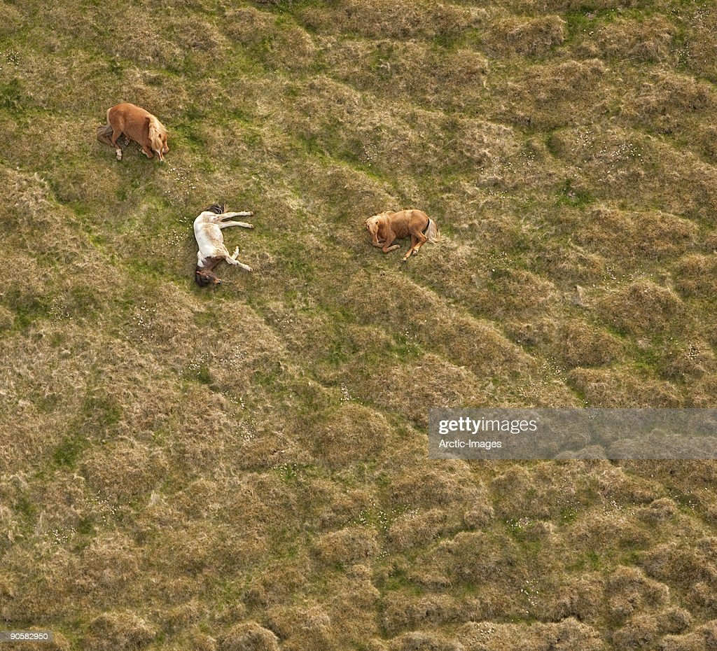 Horses resting on earth mounds : Stock Photo