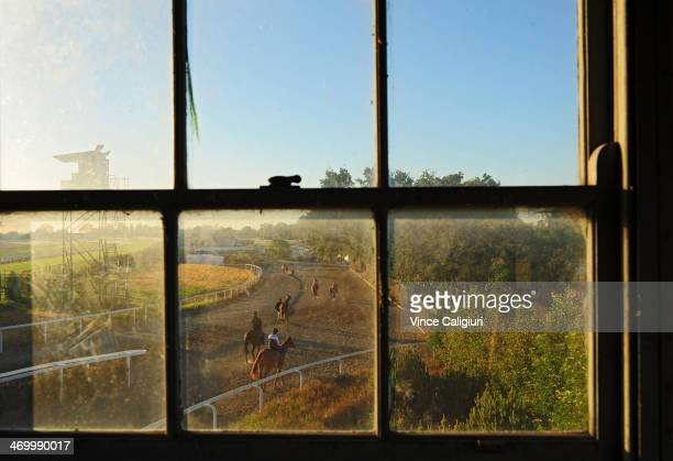 Horses return to the stables after trackwork ahead of the Blue Diamond Stakes meeting this Saturday at Caulfield Racecourse on February 18 2014 in...