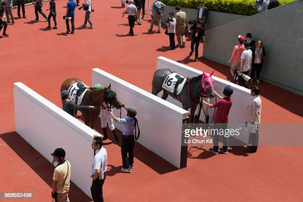 Horses return to the unsaddling area after the Race 2 at Hanshin Racecourse on June 24 2018 in Takarazuka Japan