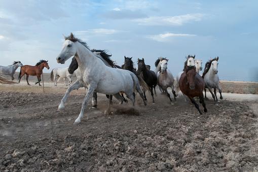 horses riding freely 1188428167