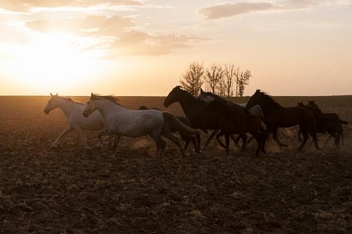 horses riding freely 1188428171