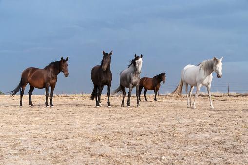 horses riding freely 1188428178
