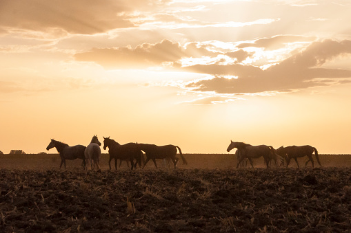 horses riding freely 1188428181